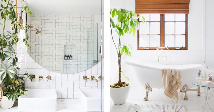 These bathroom plants will make every shower feel like a mini tropical getaway mydomaine - Simple ways making bathroom feel like mini spa ...