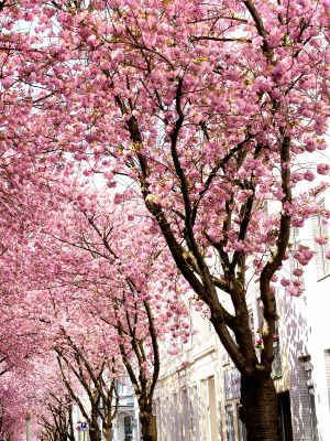 I Googled Cherry Blossom and Found the Season's Prettiest Shoe Color