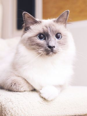Time to Procrastinate—Here Are the 9 Cutest Cat Breeds Around