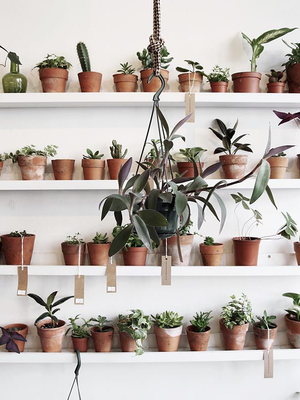Plant Lovers: Amazon Is Having a One-Day Sale on Succulents