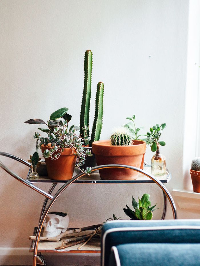 15 Cute Plant and Gardening Gift Ideas