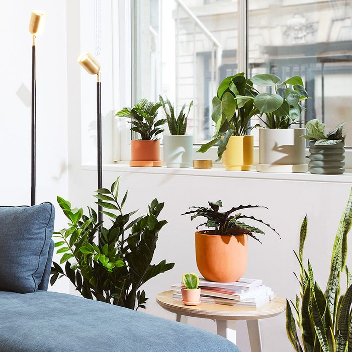 The 9 Best Indoor Plants to Make Your Space Healthier