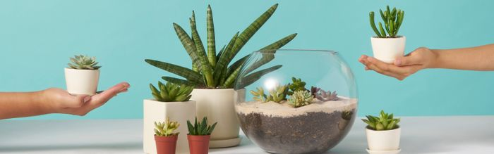 These Indoor Plants Will Make Your Space Healthier—and They're Hard to Kill