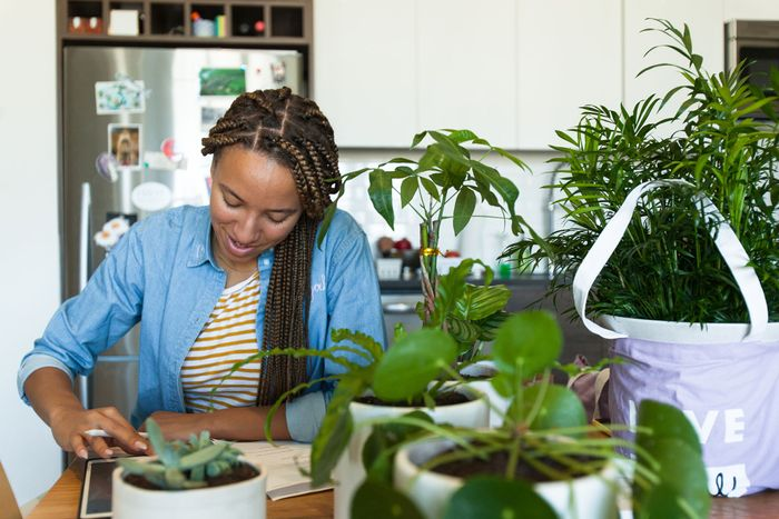 How to Choose and Care for Plants in an Apartment