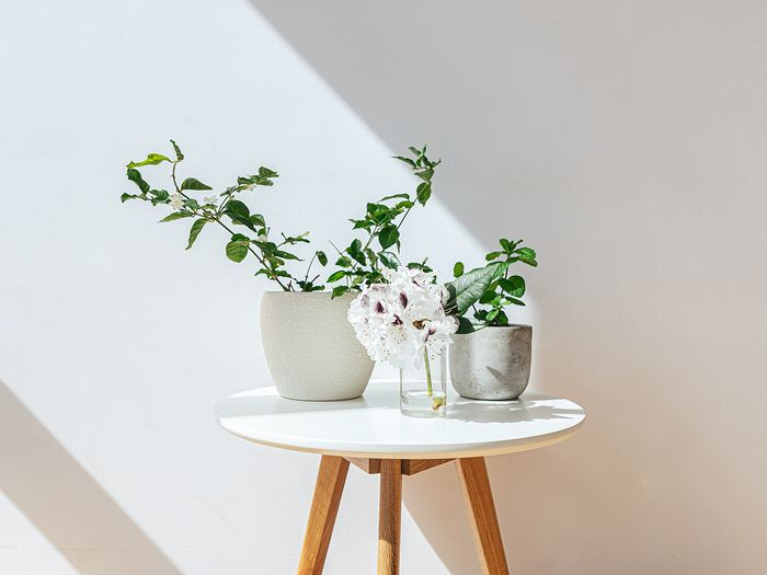 5 Best Indoor Plants for Clean Air to Add to Your Home