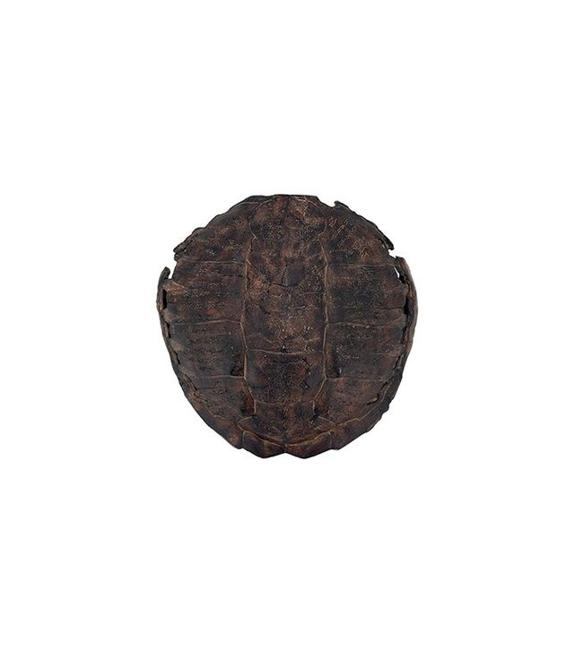 One Kings Lane Weathered Turtle Shell Decor