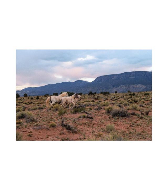 """Brian Merriam """"Horses"""" Print"""