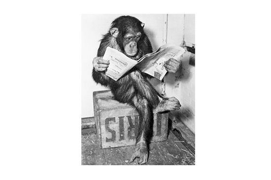 art.com Chimpanzee Reading Newsper Print by Bettmann, $