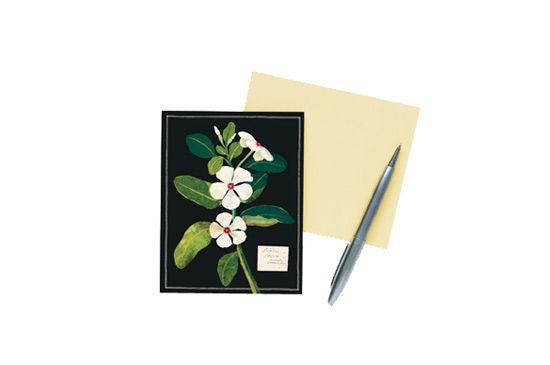 Galison Mary Delany Floral Note Cards