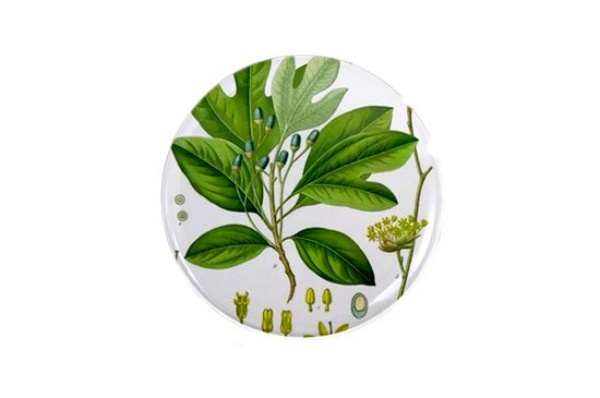Cafe Press Botanical Sassafras Magnet
