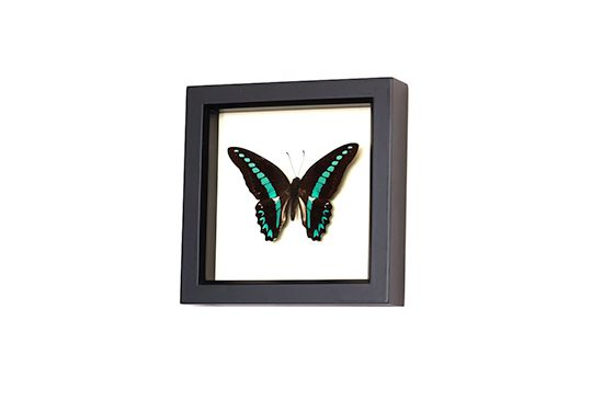 Etsy Framed Butterfly