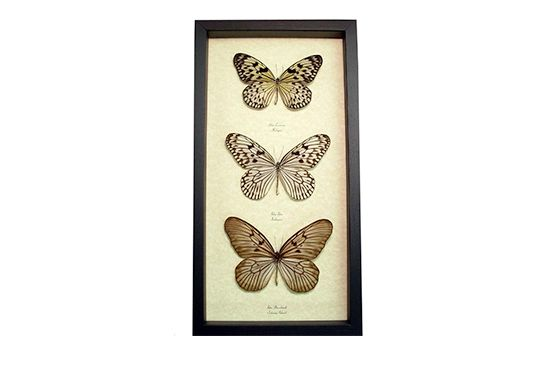 Etsy Framed Butterflies