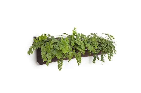 Woolly Pocket Wally 5 Living Wall Planter