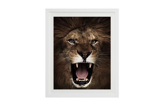 Saatchi Online Lion from An.imals.net by Michael Duva