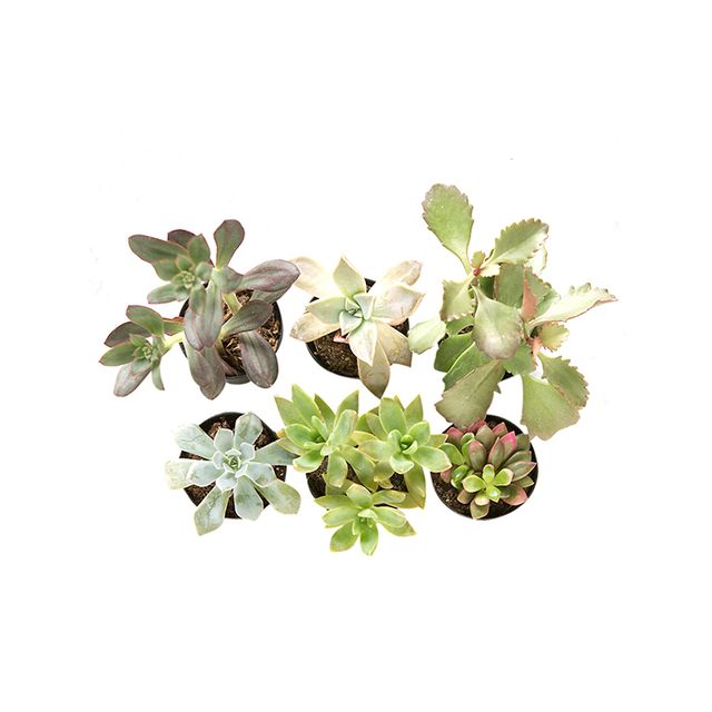 Terrain Terrarium Plant Collection