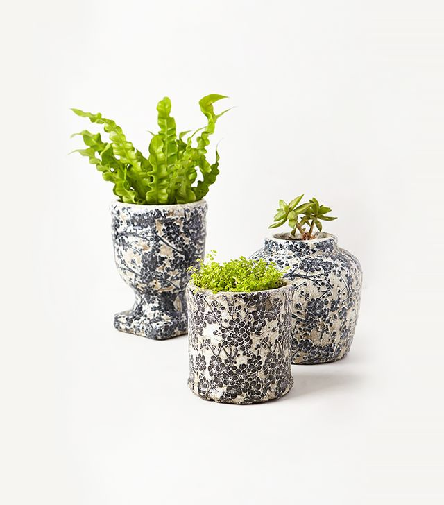 Anthropologie Daylily Herb Pot