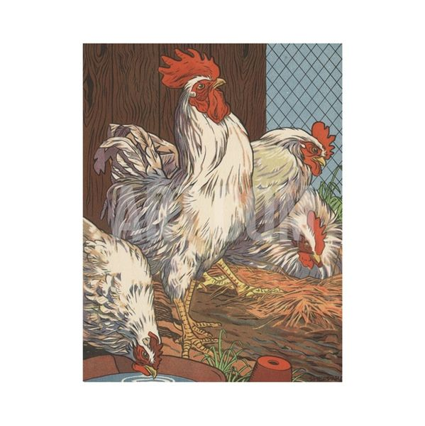 Art.com Illustration of Four White Chickens