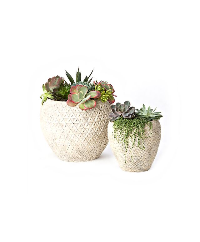 Terrain Diamond Terracotta Pots