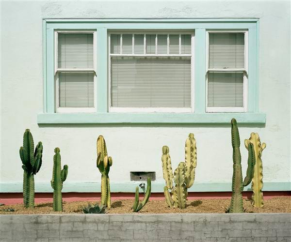 "Mark Yaggie ""Cacti Study"", 20""x24"""