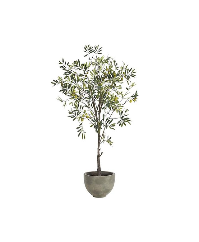 Crate & Barrel Potted Olive Tree