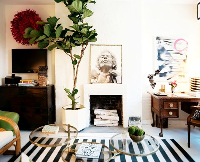 19 Reasons Why You Need a Fiddle Leaf Fig Tree