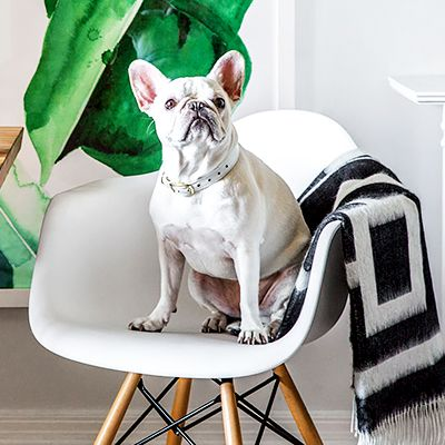 12 Photos of Pets on Chic Furniture, Just Because