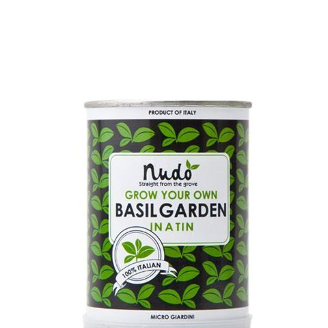 Grow Your Own Basil Garden in a Tin