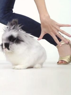 The Cutest Video Ever: Bunnies, Party Shoes & Vogue