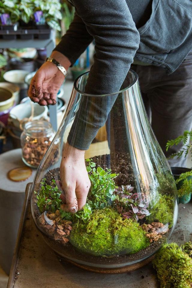 5 Inspiring (& Easy!) DIY Indoor Gardens