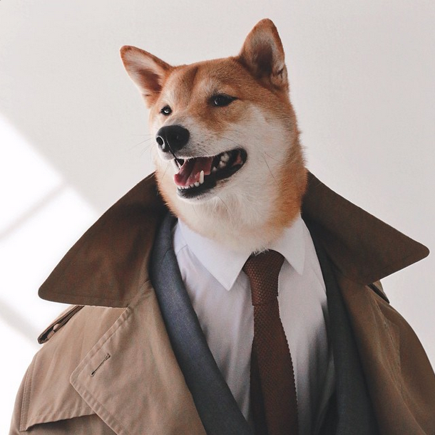 Menswear Dog Will Be Your New Favorite Instagram Account