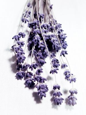 Why You Should Smell Like Lavender to Gain Peoples' Trust
