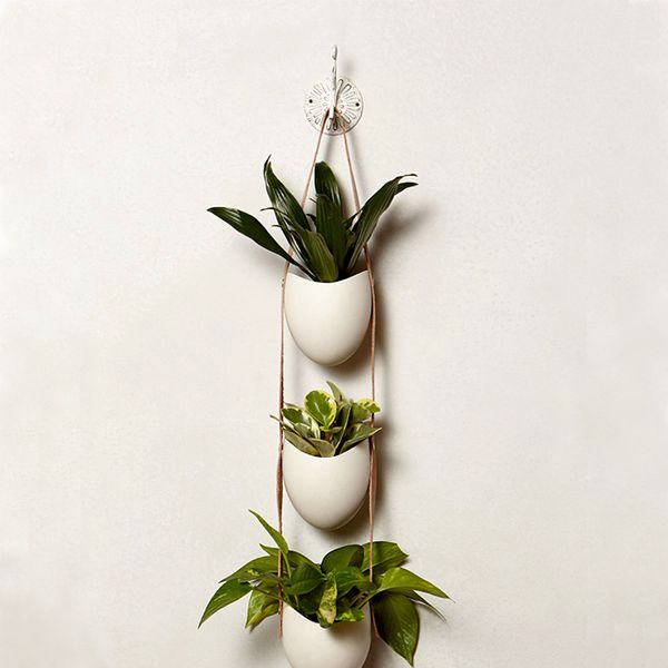 Light + Ladder Leather-Latched Wall Planter