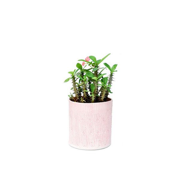 Hadley Sedgwick Cable Knit Planter