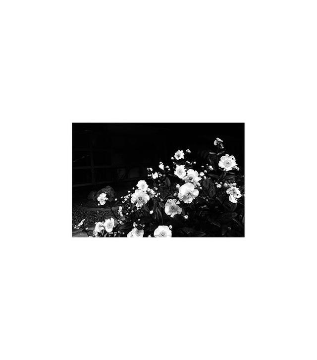 "by Julia Kostreva ""Night Flowers"""