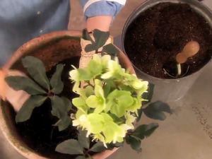 How to Plant Flowers for Early Spring
