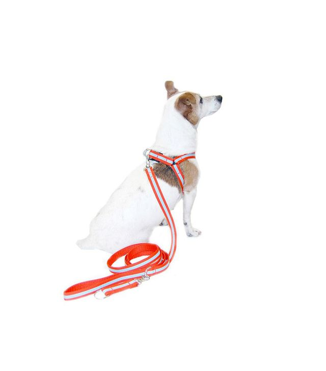Harry Barker Eton Dog Harness