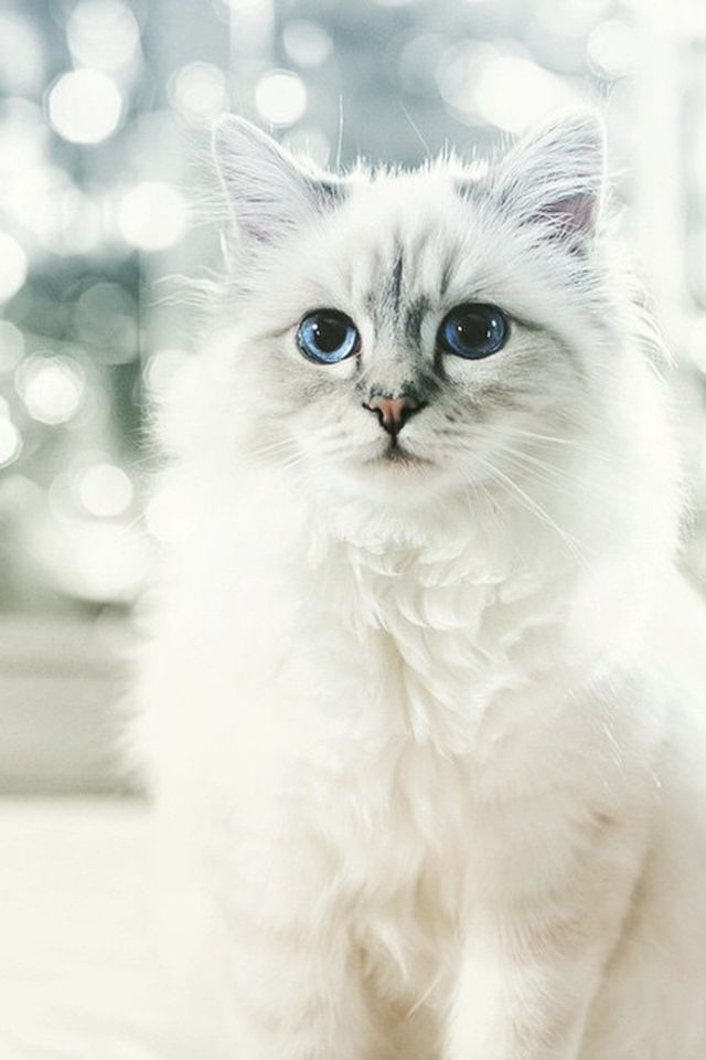 The Amount of Money Choupette Makes Modeling Is Actually Mind-Blowing