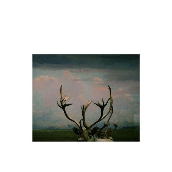 """Antlers Photo Print"" by Debbie Carlos"