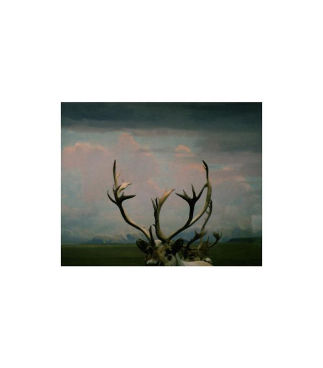 """""""Antlers Photo Print"""" by Debbie Carlos"""
