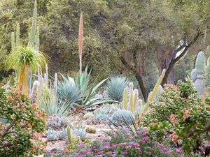 11 Gorgeous Drought-Friendly Landscapes