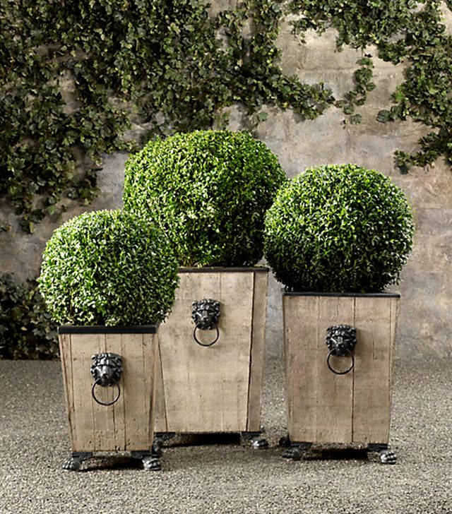 Restoration Hardware Live Boxwood Topiary