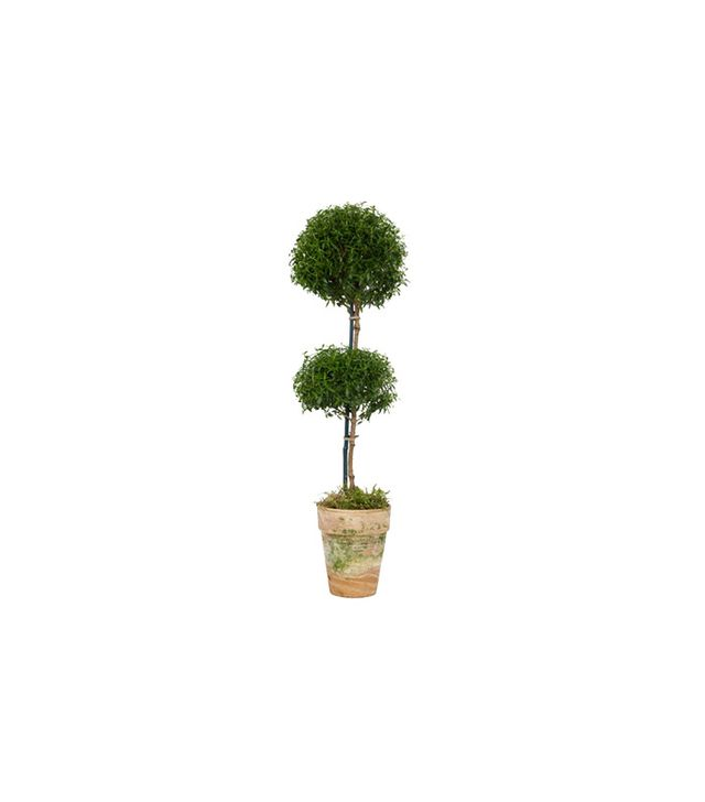 Jayson Home Double Myrtle Topiary