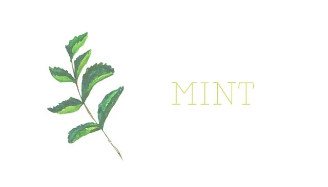 Mint is one of the invasive plants we were referring to earlier. It's notorious, in fact. The plus side? If you give your mint its own pot, it will definitely give you a lot to work with....