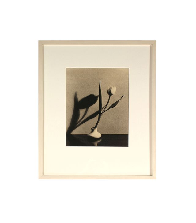 "Dr. F.W. Buraky ""1920s Tulip and Shadow"""