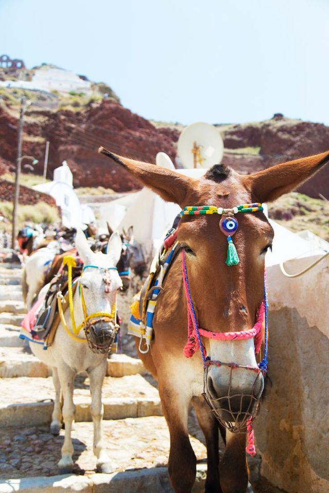 Have you ever seen donkeys so well accessorized? These beautiful inhabitants of Santorini might rival even the photogenic city itself.  Location: Santorini, Greece