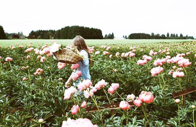 A field of shoulder-height peonies in shades of sugary sweet pink? Don't mind if we do…  Location: Adelman Peony Gardens, Salem, Oregon  Are you on Pinterest? Leave your handle or...