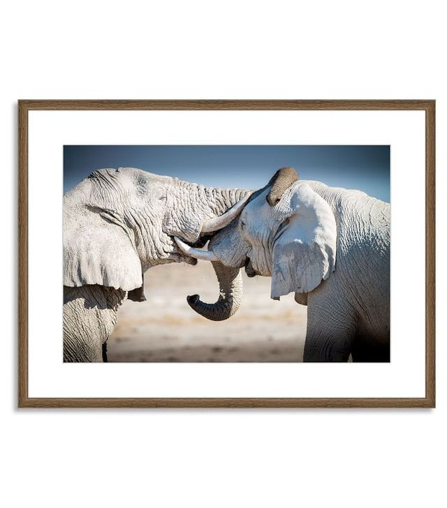 Offset for West Elm Two Elephants by Aurora Photos