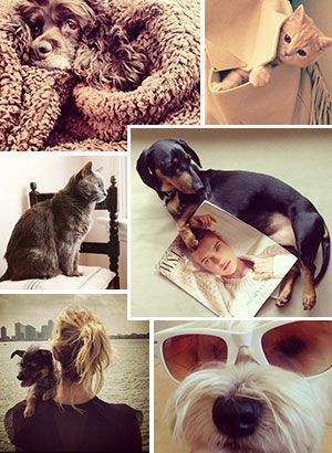 Petstagram! 42 of the Fashion World's Cutest Pets