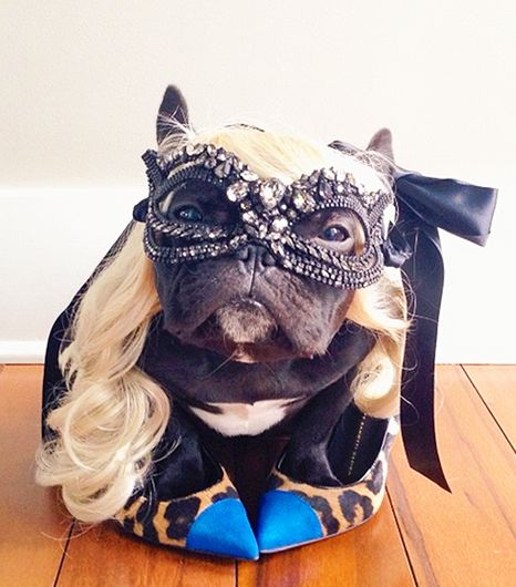 The Best-Dressed Animals of Instagram