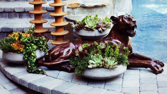 How To: Arrange Succulents